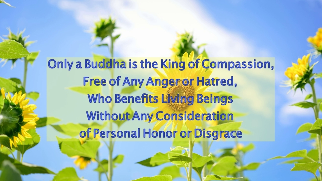 Only a Buddha is the King of Compassion, Free of Any Anger or Hatred, Who Benefits Living Beings Without Any Consideration of Personal Honor or Disgrace